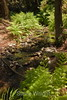 Sobranes Creek - Garrapata (23)