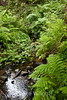 Sobranes Creek - Garrapata (81)
