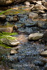Sobranes Creek - Garrapata (12)