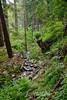 Sobranes Creek - Garrapata (93)
