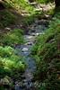 Sobranes Creek - Garrapata (47)