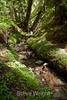 Sobranes Creek - Garrapata (68)