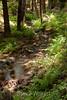 Sobranes Creek - Garrapata (31)