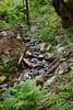 Sobranes Creek - Garrapata (94)