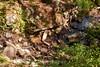 Sobranes Creek - Garrapata (34)