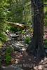 Sobranes Creek - Garrapata (2)