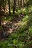 Sobranes Creek - Garrapata (30)