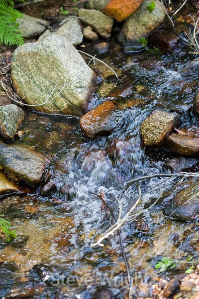 Sobranes Creek - Garrapata (61)