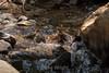 Sobranes Creek - Garrapata (18)