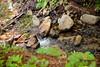 Sobranes Creek - Garrapata (35)