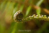 Ferns - Garrapata (1)