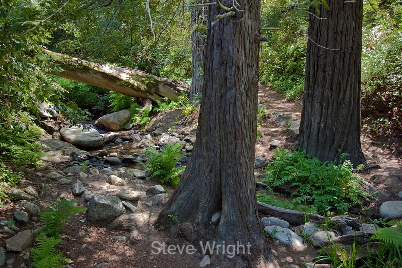 Sobranes Creek - Garrapata (1)