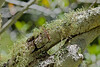 Lichen - Garrapata (1)