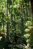 Trees - Garrapata (2)