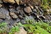Sobranes Creek - Garrapata (85)