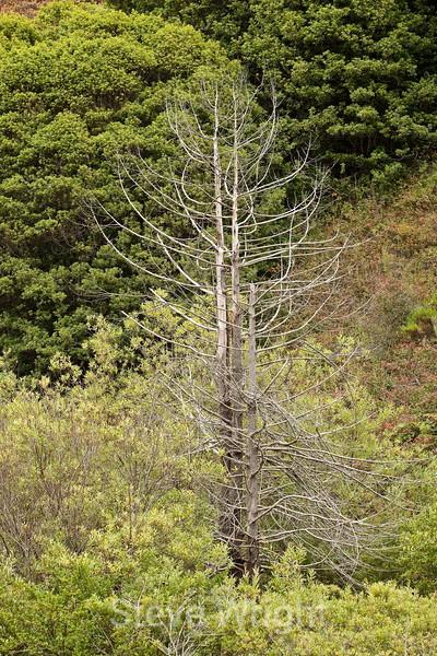 Dead Trees - Garrapata (1)