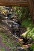 Sobranes Creek - Garrapata (122)