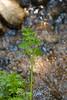 Sobranes Creek - Garrapata (15)