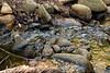 Sobranes Creek - Garrapata (100)