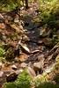 Sobranes Creek - Garrapata (33)