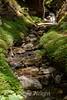 Sobranes Creek - Garrapata (71)