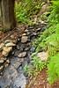 Sobranes Creek - Garrapata (86)