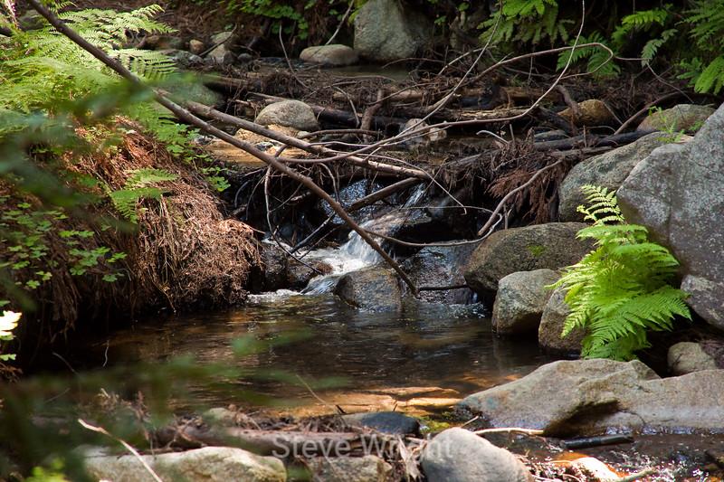 Sobranes Creek - Garrapata (38)