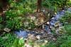 Sobranes Creek - Garrapata (64)