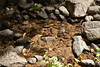 Sobranes Creek - Garrapata (120)