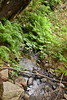 Sobranes Creek - Garrapata (82)