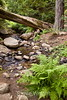 Sobranes Creek - Garrapata (73)