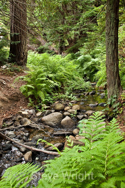 Sobranes Creek - Garrapata (80)