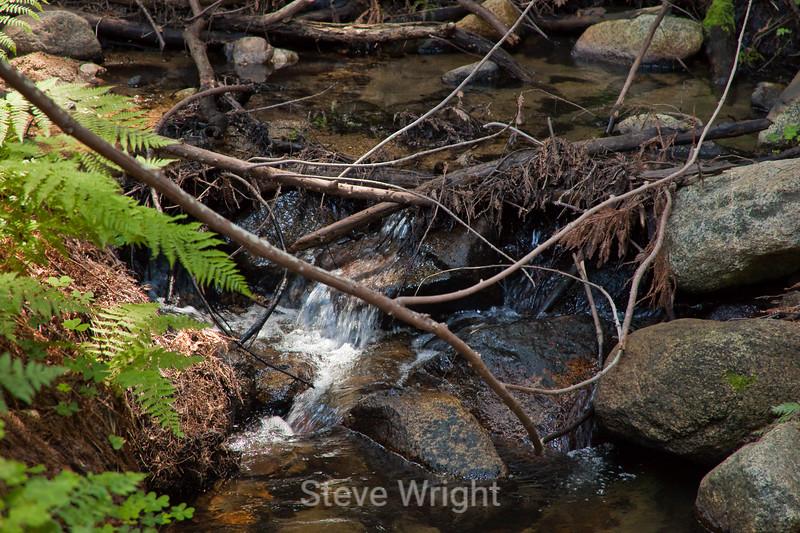 Sobranes Creek - Garrapata (39)