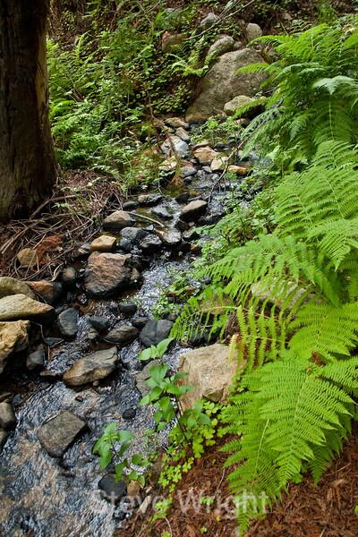 Sobranes Creek - Garrapata (88)
