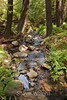Sobranes Creek - Garrapata (28)