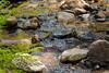Sobranes Creek - Garrapata (11)