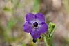 Flowers - Garrapata (2)