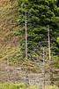 Dead Trees - Garrapata (2)