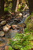Sobranes Creek - Garrapata (25)