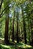 Trees - Garrapata (3)