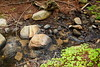 Sobranes Creek - Garrapata (87)