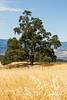 Trees - Henry Coe Park #4161