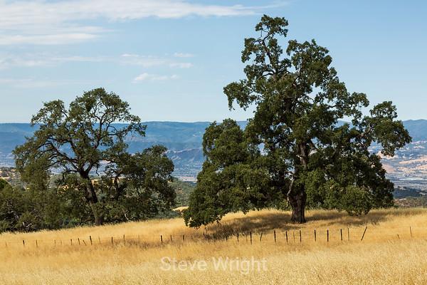 Henry Coe State Park, CA 8-18-2012