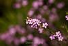 Flowers - Japanese Friendship Garden #0341