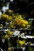 Flowers - Japanese Friendship Garden #0447