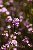 Flowers - Japanese Friendship Garden #0344