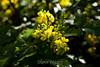 Flowers - Japanese Friendship Garden #0419