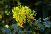 Flowers - Japanese Friendship Garden #0416