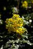 Flowers - Japanese Friendship Garden #0432