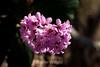 Flowers - Japanese Friendship Garden #0360